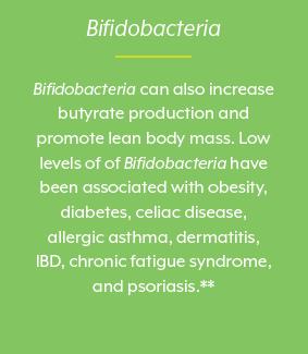 Bifidobacteria, beneficial bacteria, gut bacteria